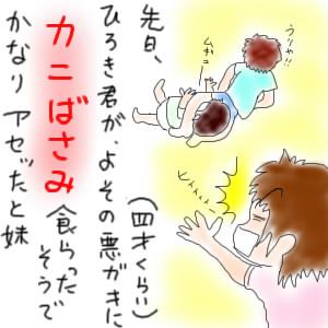 ひろき君がよその悪ガキ(4歳くらい)にカニばさみ食らわされて焦ったと妹。