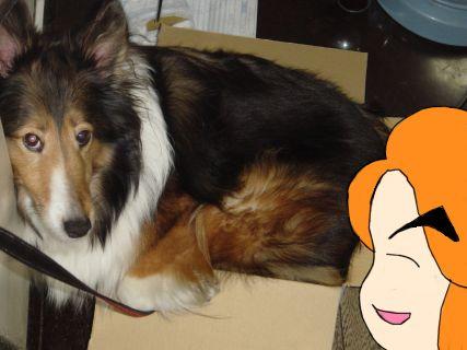 犬なのに狭い所が好きなアリス