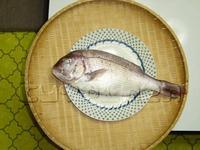大きな鯛ですタイ