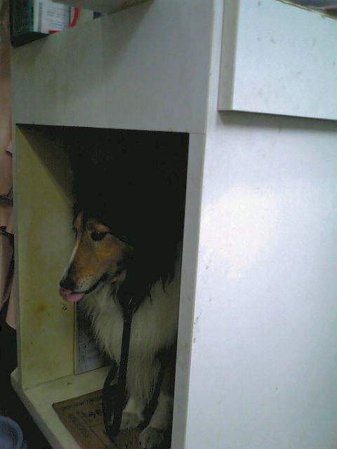 Tomoの愛犬、アリスの部屋