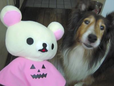 【画像】ハロウィン・コリラックマとアリス
