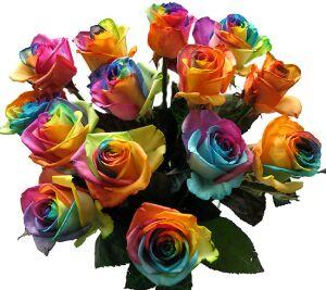 オランダから輸入されたサプライズのバラ - バラ・レインボーローズ オランダの虹アリス